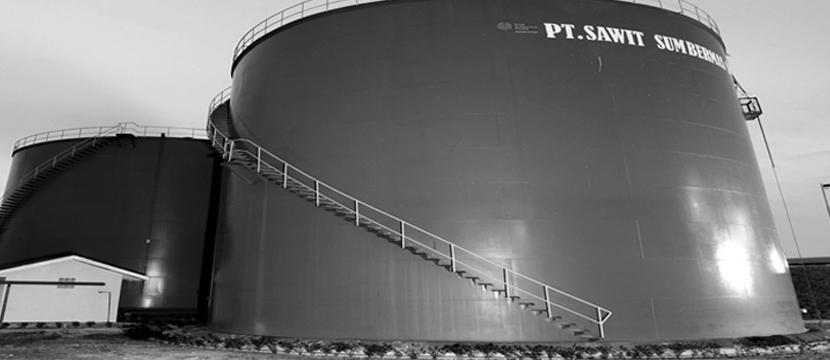 CPO & Plantation Shares
