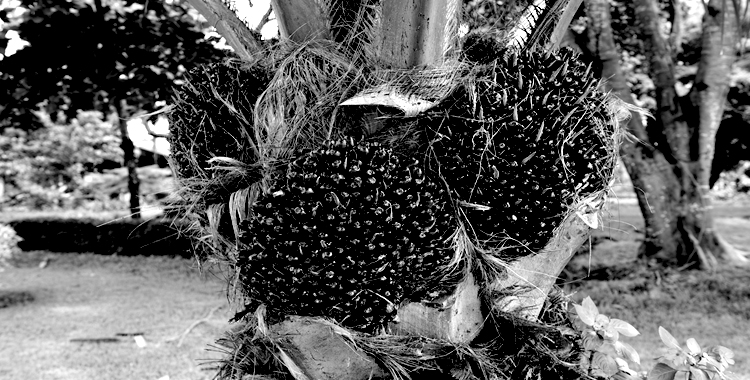 Palm Oil: Persistent Oversupply