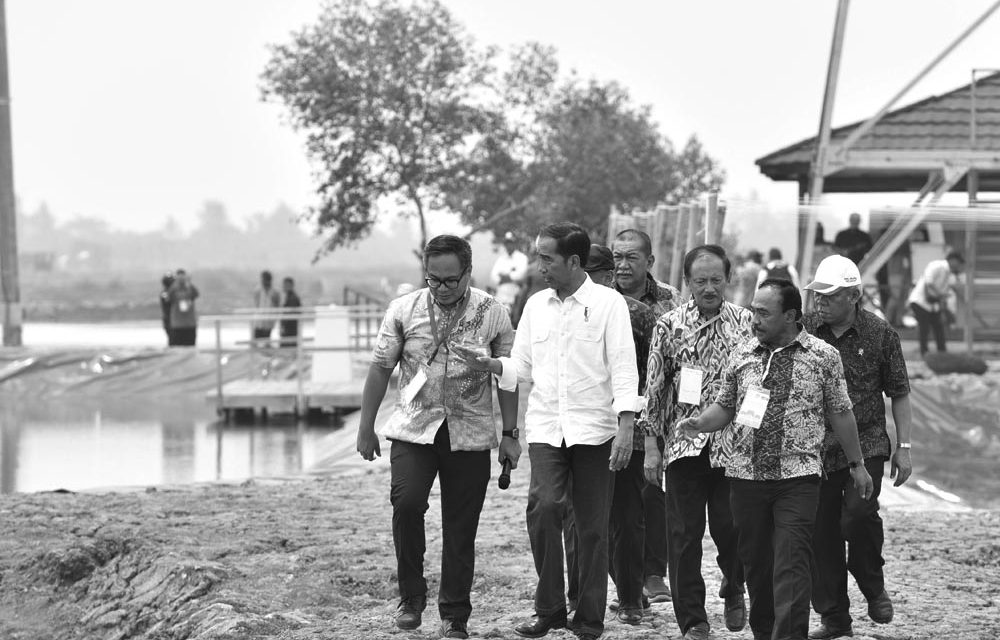 Shrimp Business & Jokowi's Fishponds